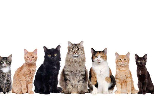cat litter main mas alta