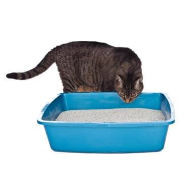 cat_litter