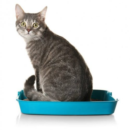 Bentonite Cat Litter Manufacturer